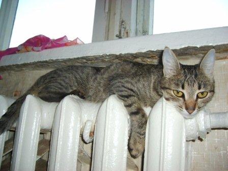 В дома тамбовчан перестанут подавать тепло