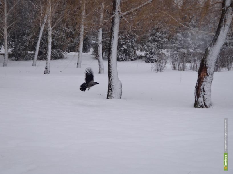 На Тамбовщине теперь можно отстреливать серых ворон