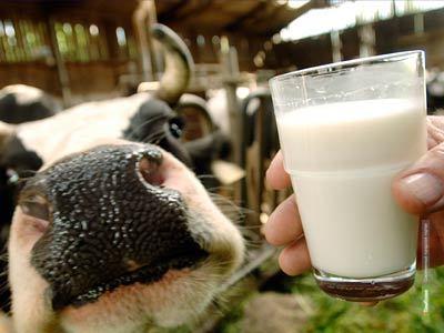В Тамбовском районе займутся производством молока и мяса