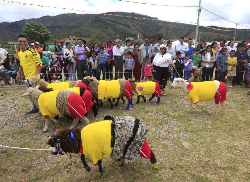 В Колумбии овцы сыграли в футбол