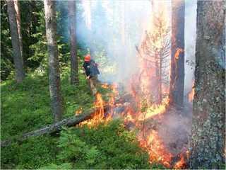 В лесах Тамбовщины запрещено жечь костры