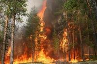 Гори все огнем! Для тушения лесного пожара теперь нужна лицензия