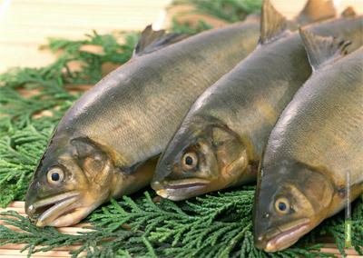 Вместо зарплаты тамбовчанам выдали рыбу
