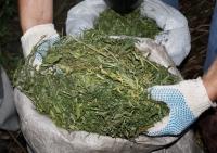 Полицейские задержали тамбовчанина с полкило марихуаны