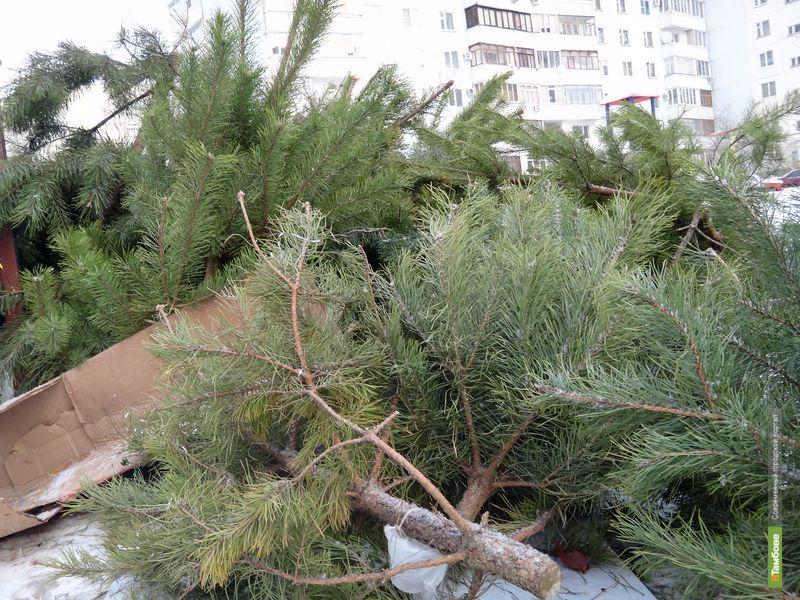 Прокуроры обязали тамбовских чиновников вывезти новогодние елки