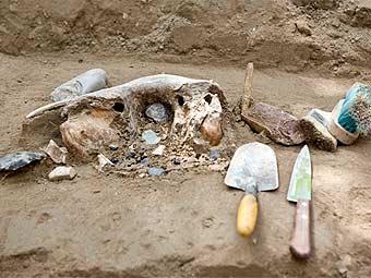 В Тамбовской области обнаружили останки мамонта
