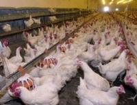 Инжавинская птицефабрика остро нуждается в рабочих руках
