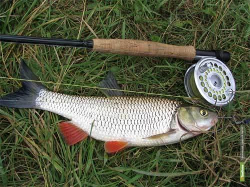 Тамбовчане привезли бронзу с рыболовного чемпионата