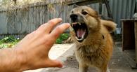 В Тамбовской области растёт заболеваемость бешенством среди животных