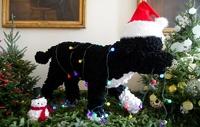 Головой собаки Обамы украсили рождественское печенье