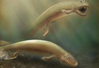 В Канаде нашли останки древней рыбы с четырьмя ногами