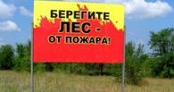 С начала сезона в лесах Тамбовщины произошло 10 возгораний