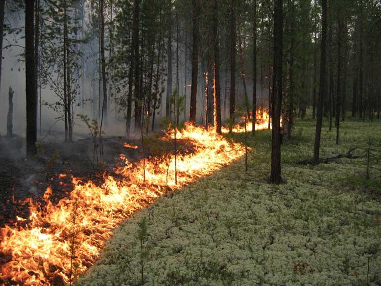 В Мичуринском лесхозе произошел пожар