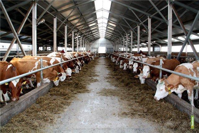 На Тамбовщине частное сельхозпроизводство поддержали грантами
