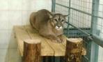 В зоопарке ТГУ для экзотических животных отремонтировали павильон