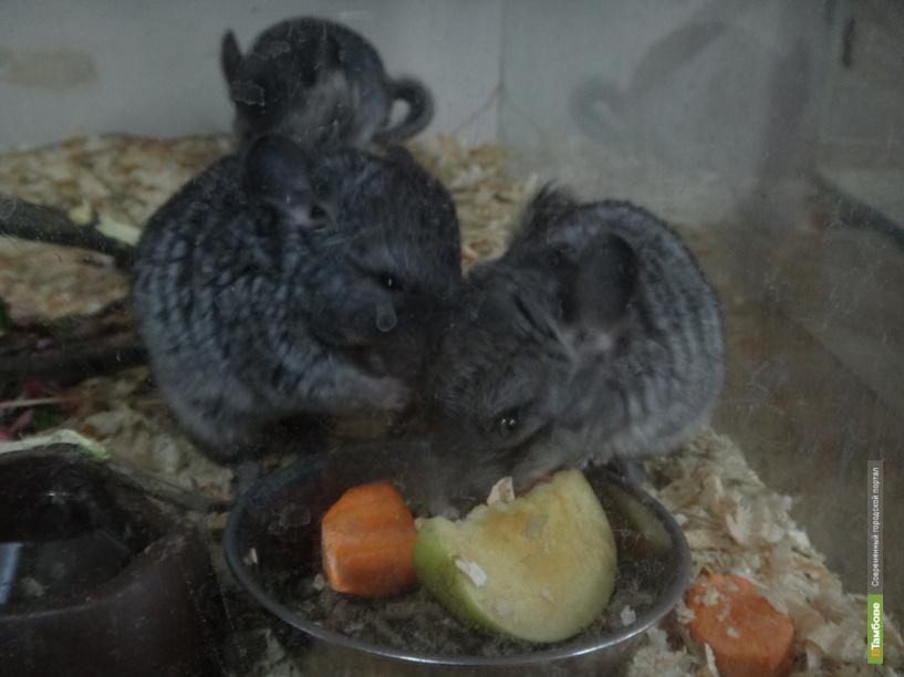 Зоопарк державинского университета приглашает тамбовчан на свой день рождения