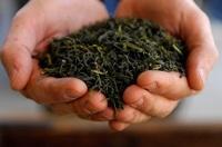 От излучения монитора спасет зеленый чай