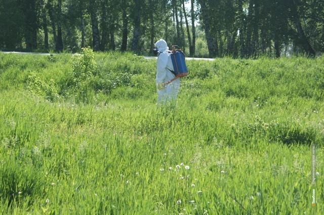Наркополицейские уничтожили дикорастущую коноплю на площади около четырёх гектаров