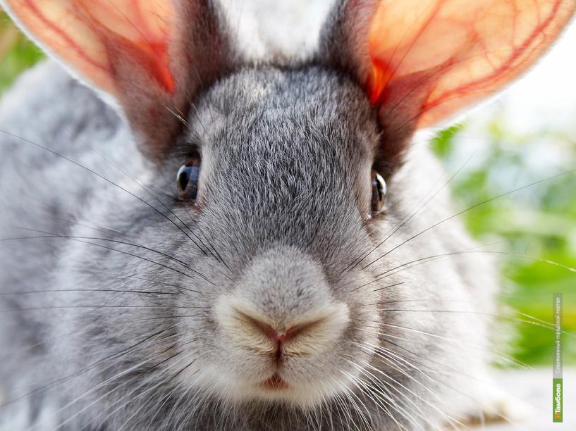 На Тамбовщине стали пропадать кролики