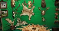 Тамбовские охотники продемонстрируют свои трофеи на выставке в Курске