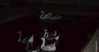 Тамбовчане смогут увидеть ночную жизнь обитателей зоопарка ТГУ