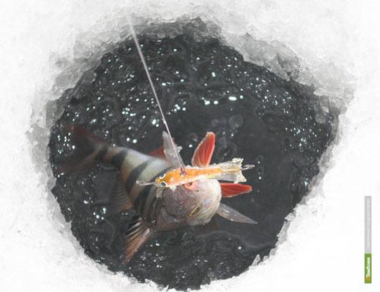 Юные тамбовчане посоревнуются в ловле рыбы