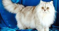 Британские ученые выяснили, почему кошки такие привередливые