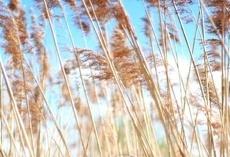 Тамбовщина получила 324 миллиона рублей на развитие сельского хозяйства