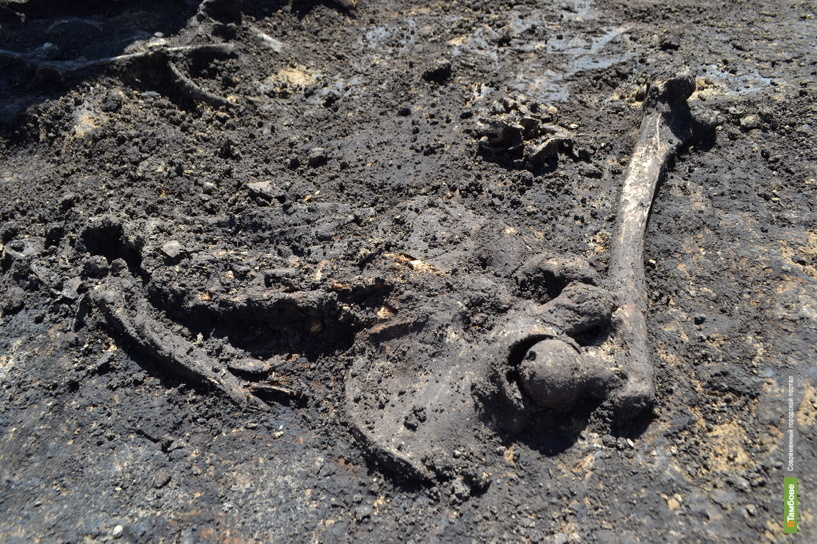 Под Тамбовом нашли останки ровесников последних пирамид