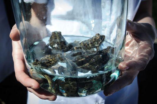 Студенты-медики отпустили лабораторных лягушек на волю