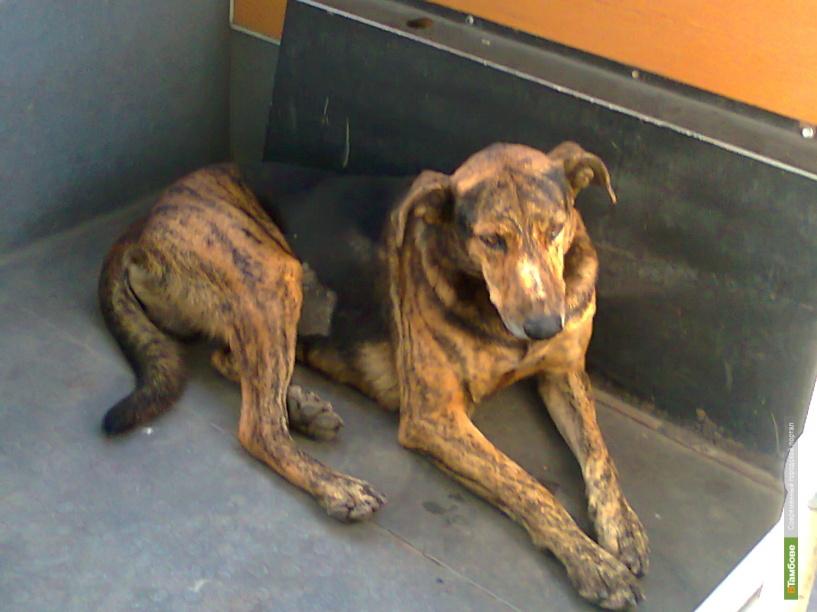 Для бездомных животных откроют пункты временного содержания