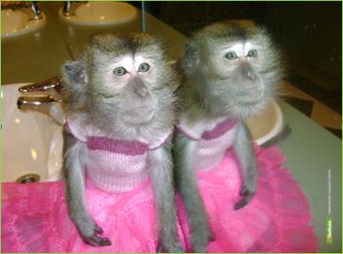 Приглашаем на выставку «Парад обезьян» и «Мир рептилий» (0+)