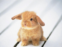 Россия и Китай договорились вместе разводить кроликов