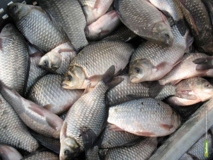 Тамбовчане едят меньше рыбы, чем жители других регионов