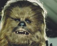 Голову Чубакки из «Звездных войн» продали за $172 тыс.