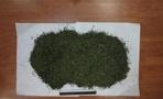 Тамбовчанина поймали почти с двумя килограммами марихуаны