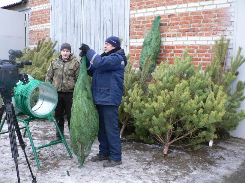В Моршанске появился аппарат для упаковки новогодних елок