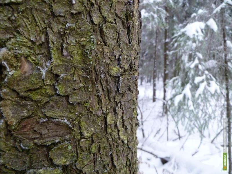 В тамбовском лесу нашли труп мужчины