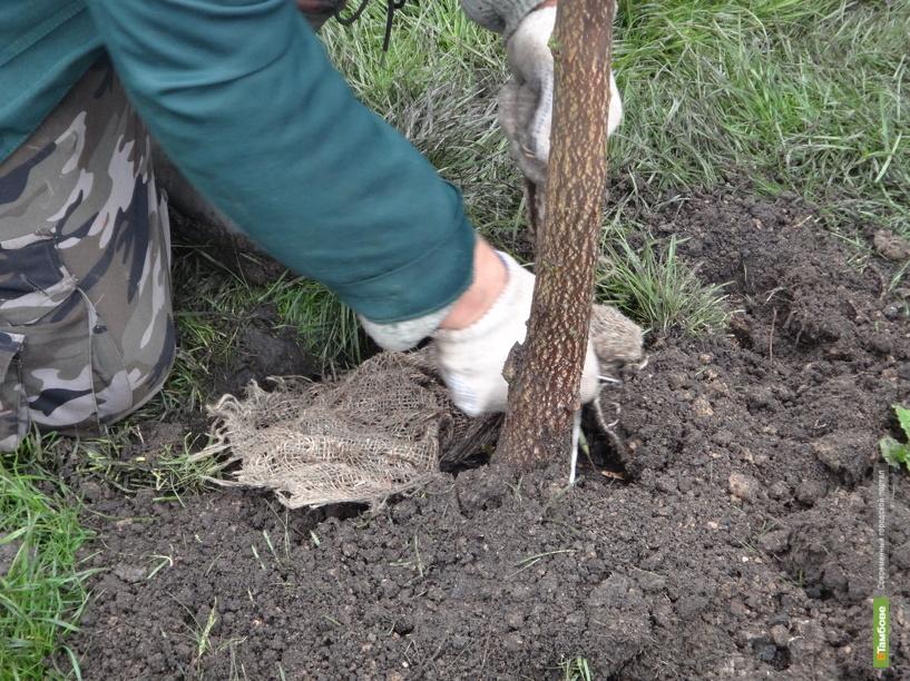 Под Тамбовом десантники посадят «Дерево в память о друге»