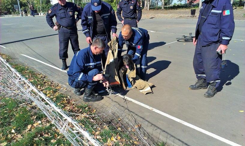 Спасатели помогли собаке выбраться из сетки