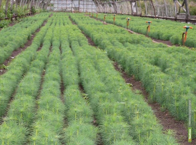 В Тамбовской области восстановили 930 гектаров лесов