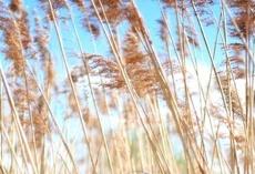 Российские и украинские аграрии обсудят в Тамбове инновации в АПК