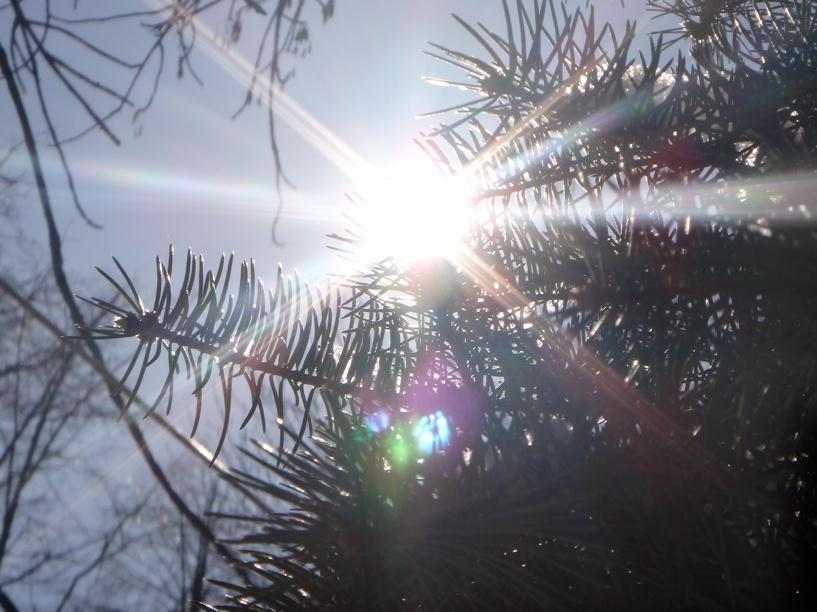 Выходные в Тамбове обещают быть солнечными