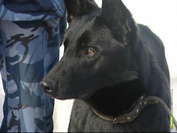 Наркотики в тамбовских колониях начали искать специально обученные собаки