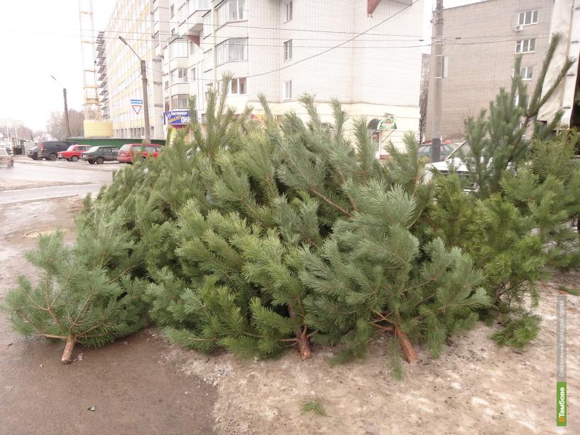 К Новому году тамбовские лесхозы заготовят 30 тысяч елок