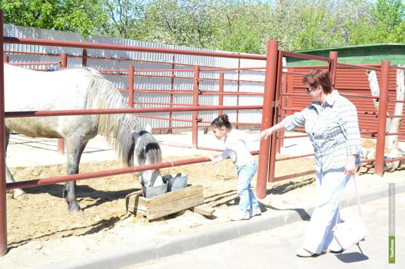 В тамбовском зоосаду посетителям запретили кормить животных