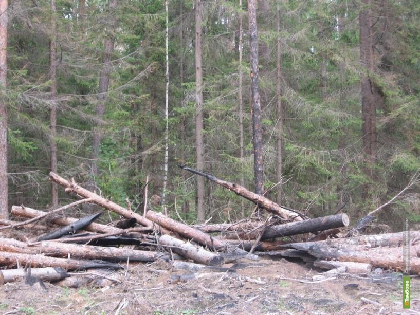 Тамбовская казна израсходует на  лесное хозяйство 60 миллионов рублей