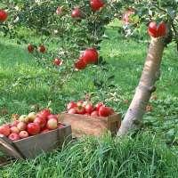 На Тамбовщине планируют пустить на садоводство 55 миллионов рублей госсредств