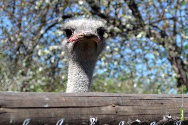 В зоопарке державинского вуза появится детский городок