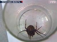 Бездомного паука Васю приютили украинские зоологи